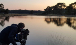 Dutch wildlife in the cinema - With VariCam in the Veluwe
